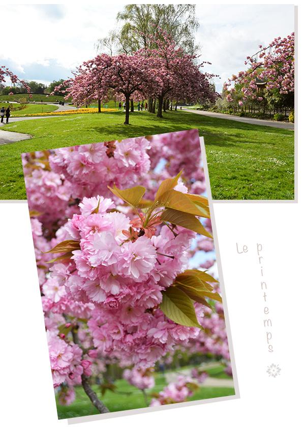 arbres en fleurs parc floral