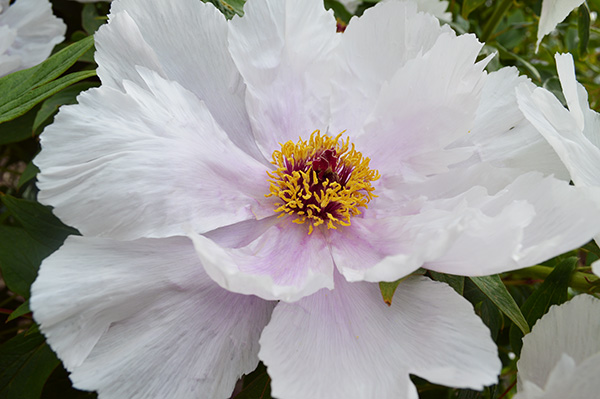 fleur blanche parc floral