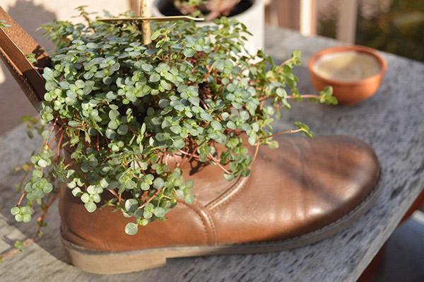 botte pot de fleurs 01